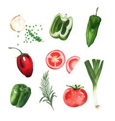 Vegetable element design watercolor on white vector