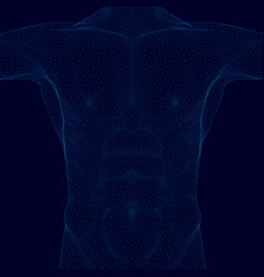 wireframe polygonal torso man body a man of vector image