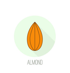 almond icon nut vector image