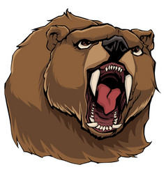 Angry bear on white vector