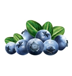 Blueberries With Leaves vector