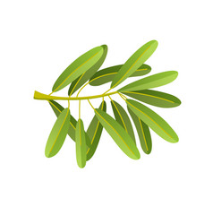 flat olives branch isolated on vector image