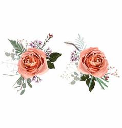 floral creamy roses bouquet design vector image