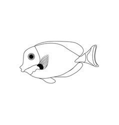 Gold-rimmed tang coloring pages vector
