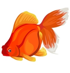 Golden fish on a white background vector image