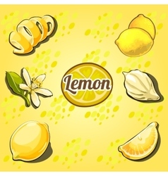 Lemon set the fruit drawn from different angles vector image