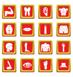 body parts icons set red vector image