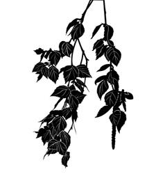 birch tree branch vector image vector image