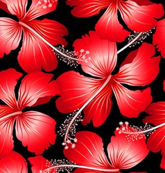 Red tropical hibiscus flowers with black vector image vector image