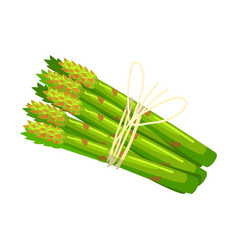 bunch of asparagus crops food item rich in vector image