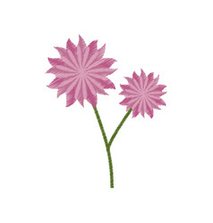 Flower aster decoration image sketch vector