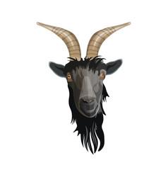 Goat head portrait vector