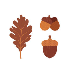 oak leaf and acorns icon set collection vector image
