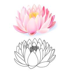 Pink lotus pattern flower set vector