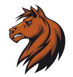 stallion head vector image