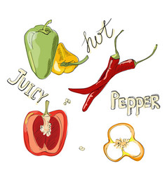 sweet and hot peppers color set of hand drawn vector image vector image