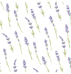 Seamless lavender pattern vector image