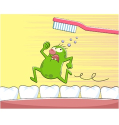 tooth germ vector image vector image