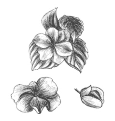 Hand drawn balsams at different stages of growth vector image