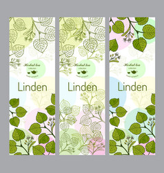 Herbal tea collection linden banner set vector