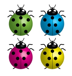ladybirds vector image