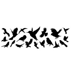 Detailed bird black silhouettes different kind vector