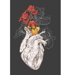 drawing Human heart with flowers vector image