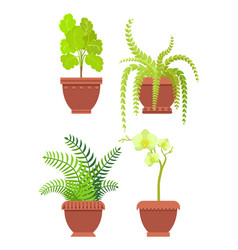 Flowers potted room plants vector
