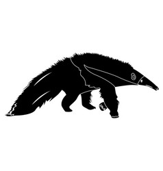 isolated anteater silhouette vector image