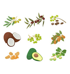 plants and nuts or seeds hair oils ingredients vector image
