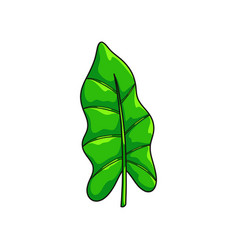 realistic green jungle leaf isolated on white vector image