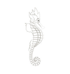 Sea horse coloring pages vector