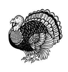 Turkey isolated on white background thanksgiving vector