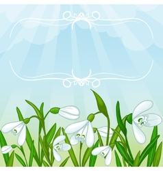 Floral background with white snowdrops vector image vector image