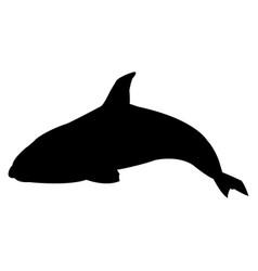 killer whale cetacea animal aquatic animals orca vector image