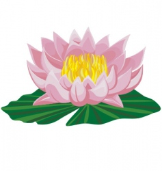 pink lotus vector image vector image