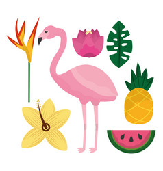 tropical flamengo hibiscus pineapple watermelon vector image