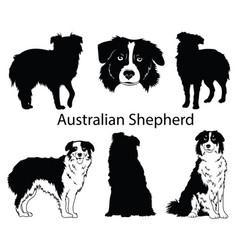 australian shepherd set collection pedigree vector image