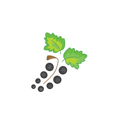 black currant icon on a white background vector image