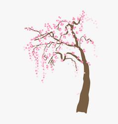 blooming pink sakura vector image