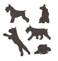 Collection schnauzer dog icons vector