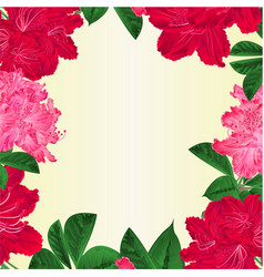Frame flowers pink white and red rhododendrons vector