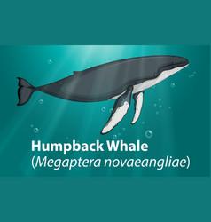 humpback whale in deep ocean vector image