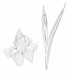 Iris floral botanical flower wild spring flowers vector
