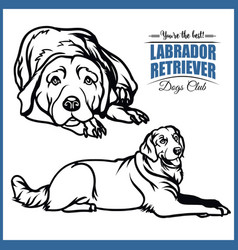 Labrador retriever - for t vector