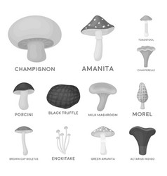 poisonous and edible mushroom monochrome icons in vector image