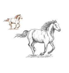 Running horses pencil sketch portrait vector