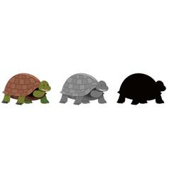 Tortoise set of different variations vector