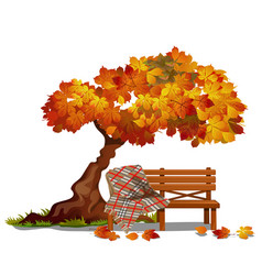 Cozy bench under autumn tree outdoor vector