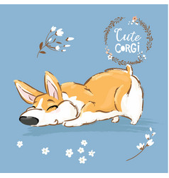 cute corgi dog puppy sniff vector image